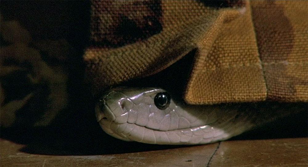 Venom (1981) - still 2